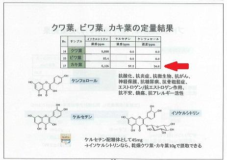 柿の葉機能性2b